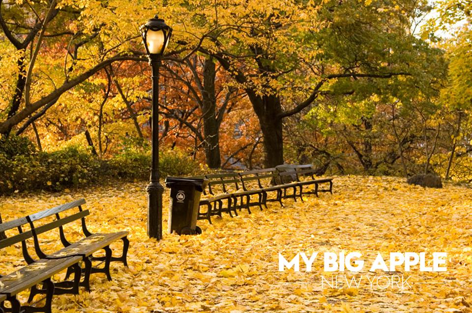 My-Big-Apple-Autum2