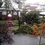 The wind blow down the tree.