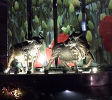 hk-bull